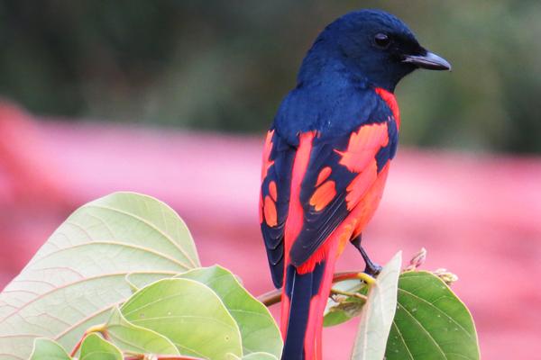 Birding from Chhahari